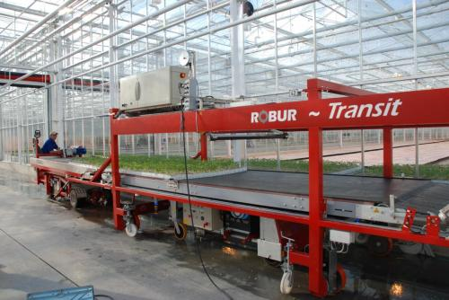 Tomaten Tomato Groente Vegetable stone wool steenwol pot Transportbaan overspoel machine