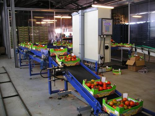 tomato tomaten crops groente tansport systeem system